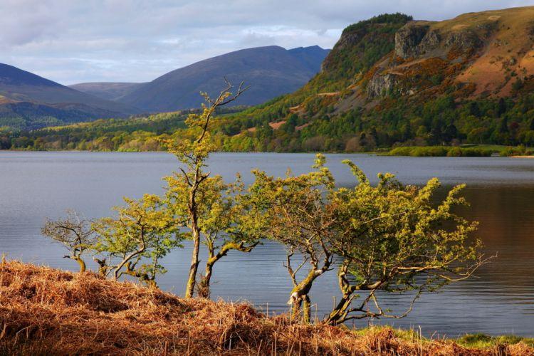 lake trees nature summer wallpaper