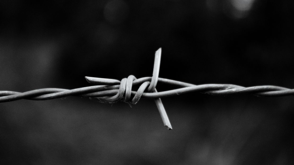 monochrome knot barbed wire macro wallpaper