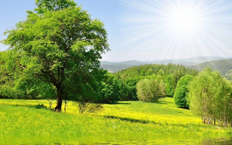 Nature forest trees sun green meadow grass water flowers wallpaper