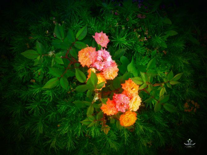 plants flowers color wallpaper
