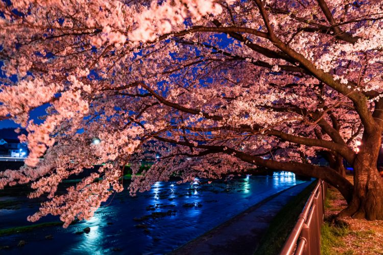 trees rivers trees flowers blossoms wallpaper