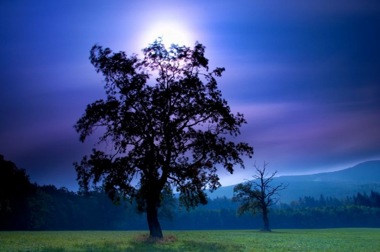 field night tree moon sky mountains wallpaper