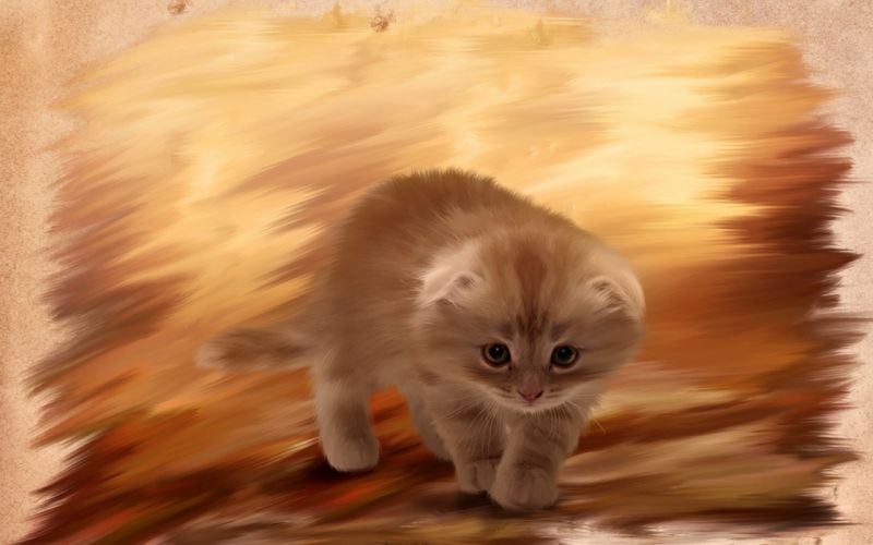furry kitten cat painting wallpaper