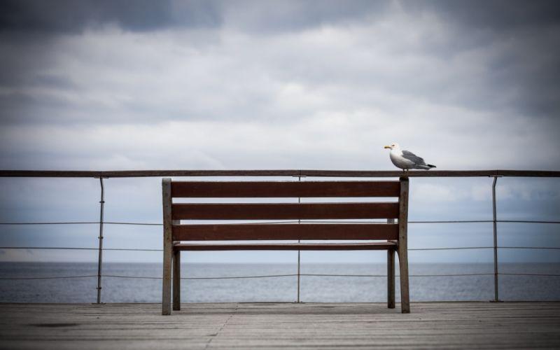 bench seagull birds ocean sky wallpaper