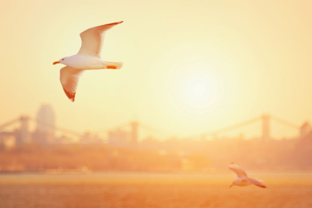 birds  gulls  morning  light bridge sunrise wallpaper