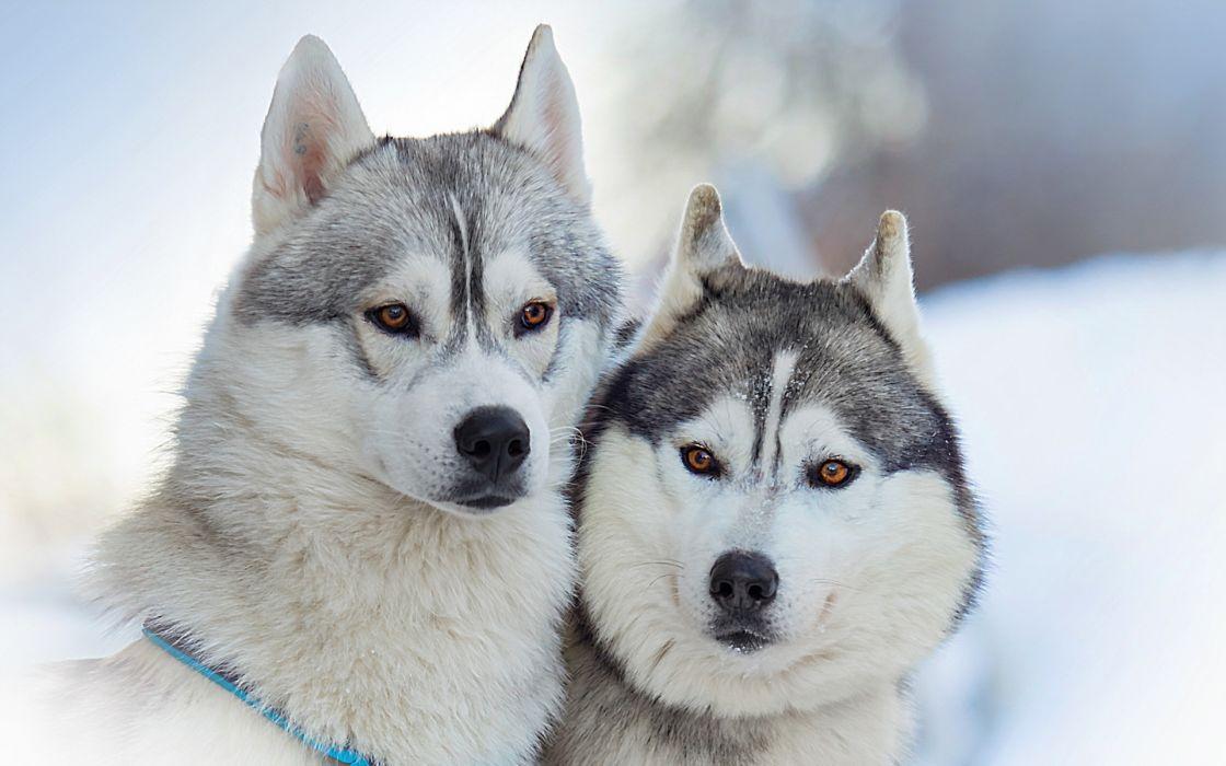 dogs friends wallpaper