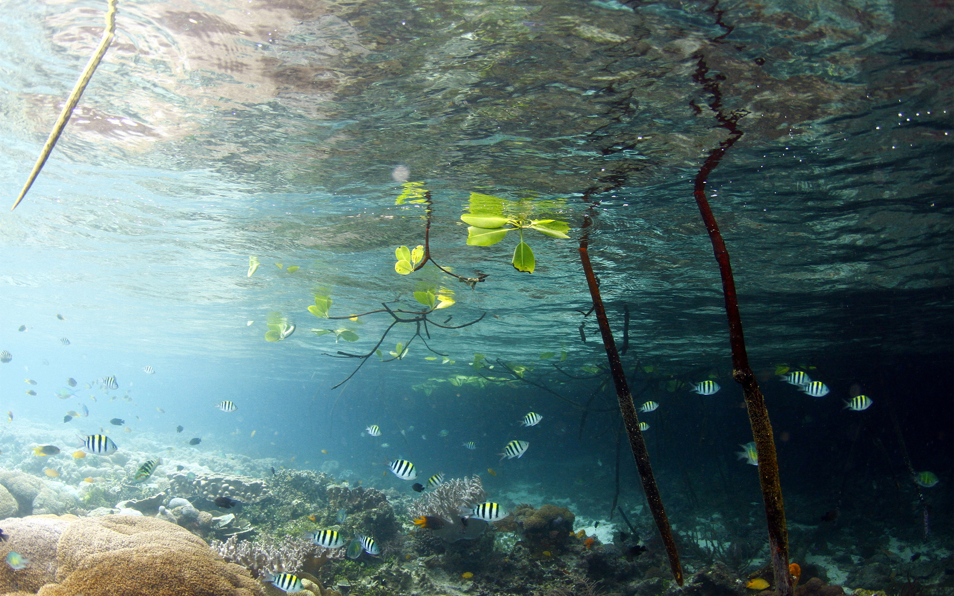 Lake water fish underwater leaves branches wallpaper ...