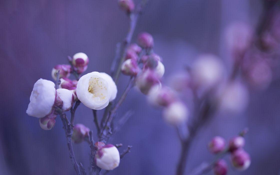 petals flowers macro wallpaper