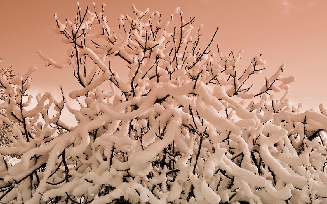 Snow Winter Tree Branches wallpaper