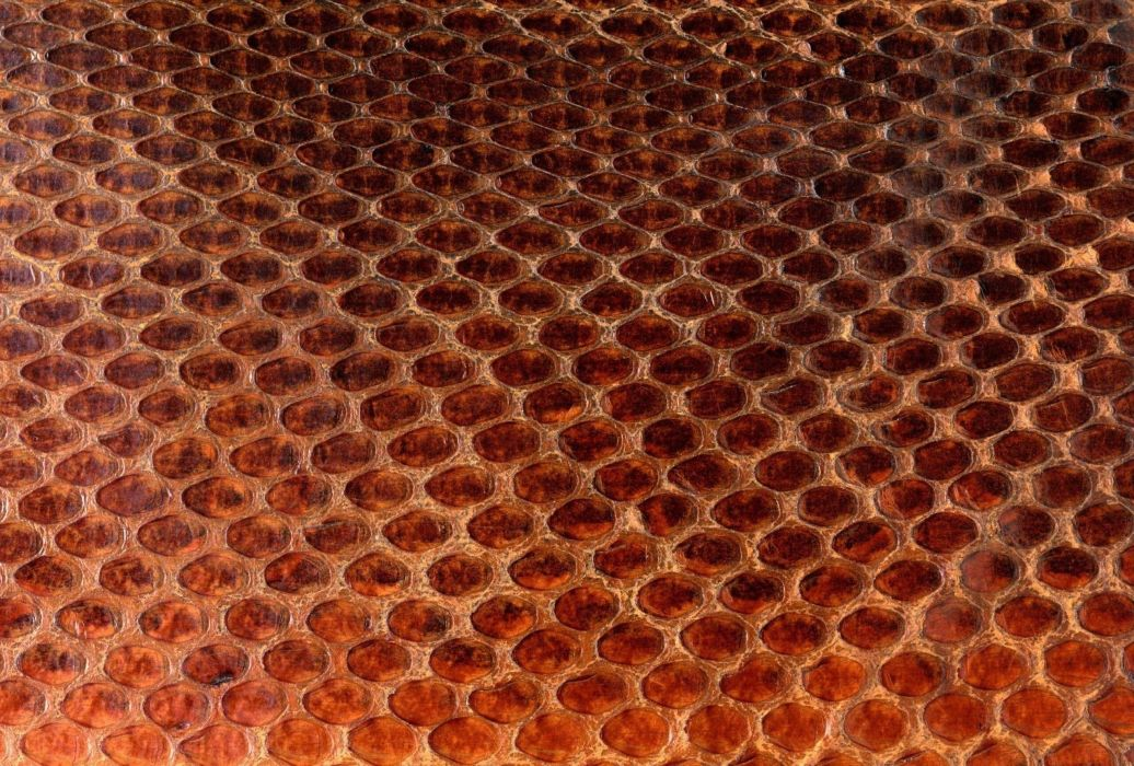 Texture Skin Scales Snake Animal Pattern Abstract