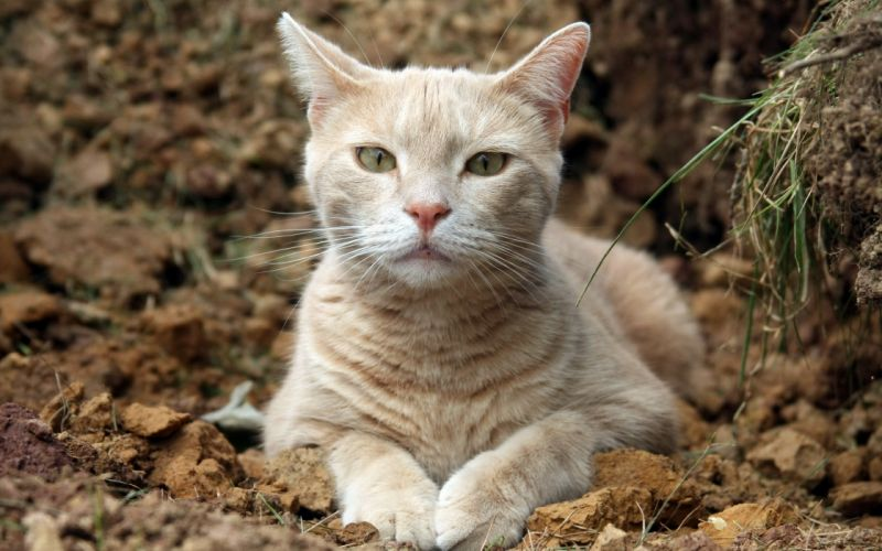 Cats Glance Snout Whiskers Animals wallpaper