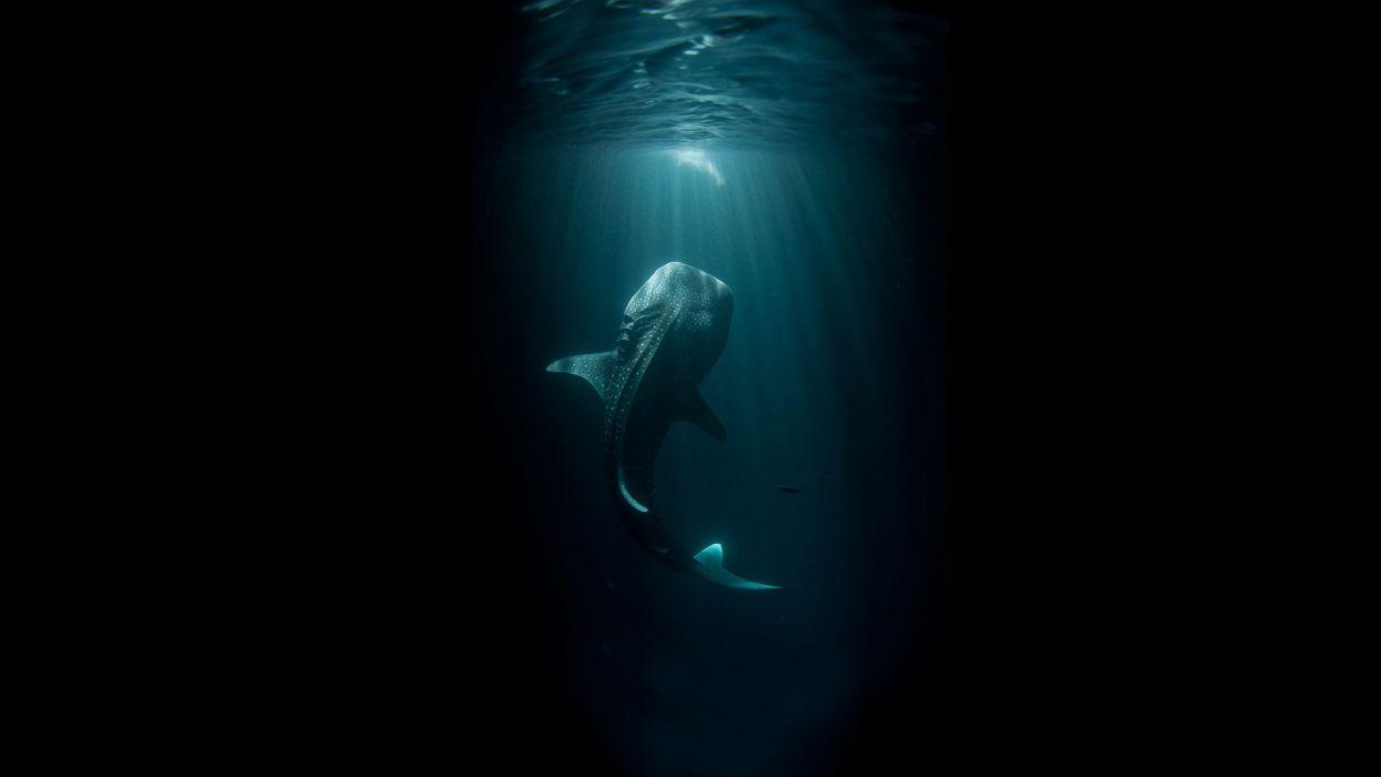 Fish Giant Underwater Ocean Black shark wallpaper ...