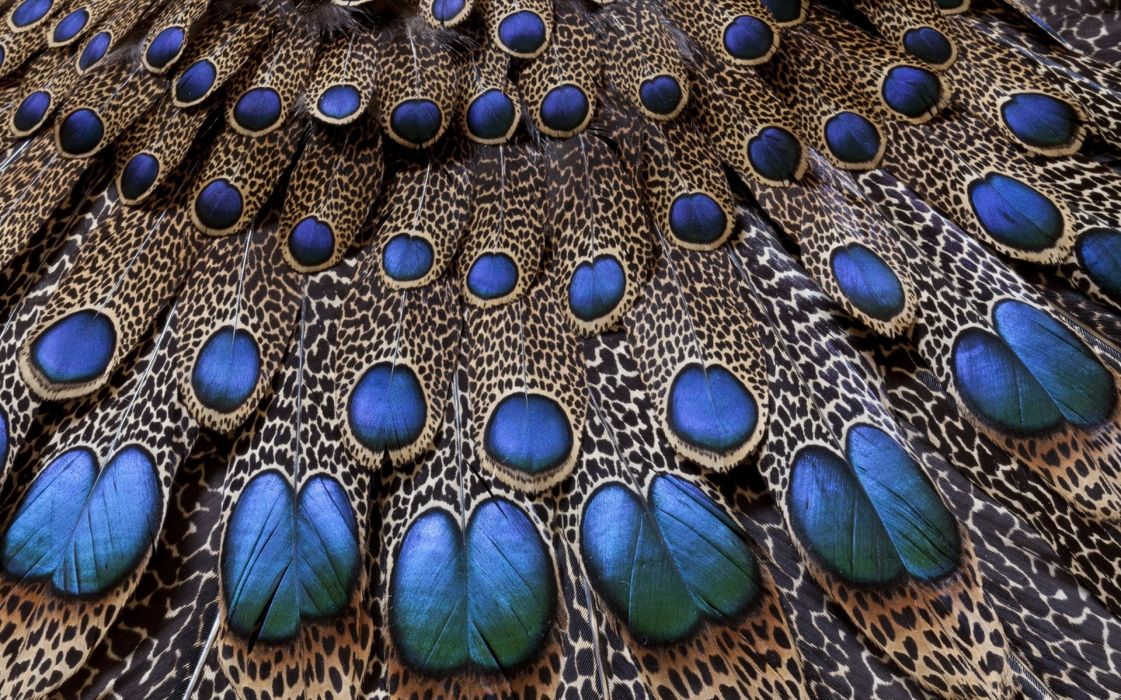 Feathers Peacock Light Background Texture wallpaper