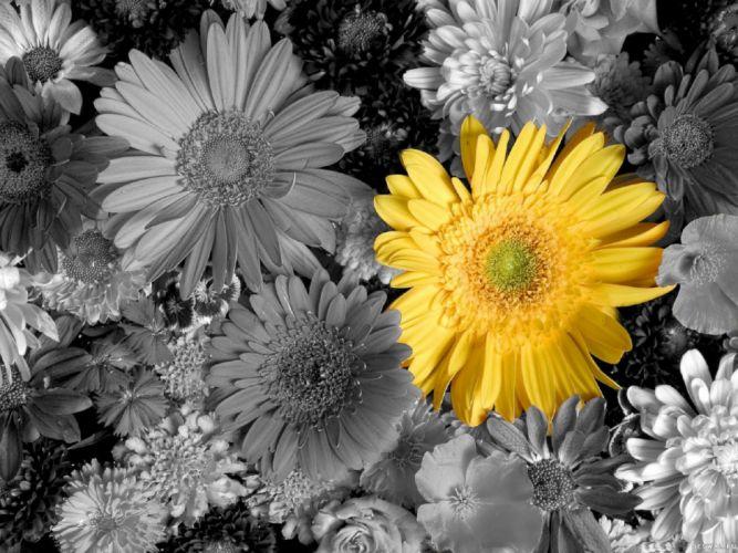 Flowers Yellow Petals Bouquet wallpaper