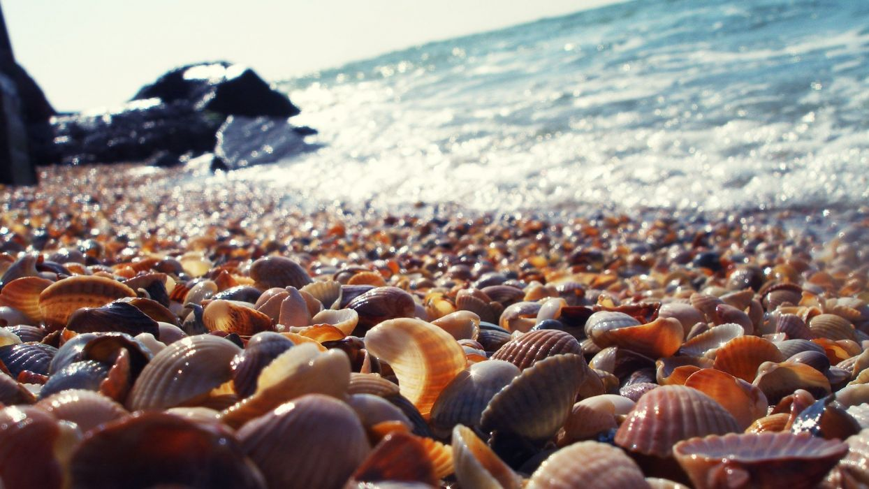Krapetz Bulgaria Beach shells ocean bokeh wallpaper