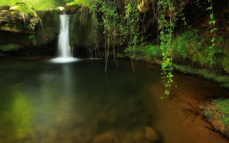 nature creek forest waterfall trees wallpaper