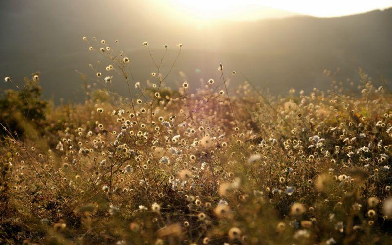 nature meadow grass mountains meadow forest vegetation sunset sunrise wallpaper