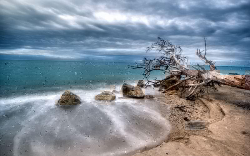 sea tree landscape beaches ocean sky wallpaper