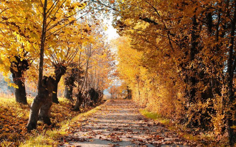 autumn road trees leaves landscape wallpaper