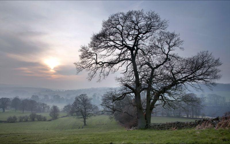 field fog tree sunset sunrise sky wallpaper