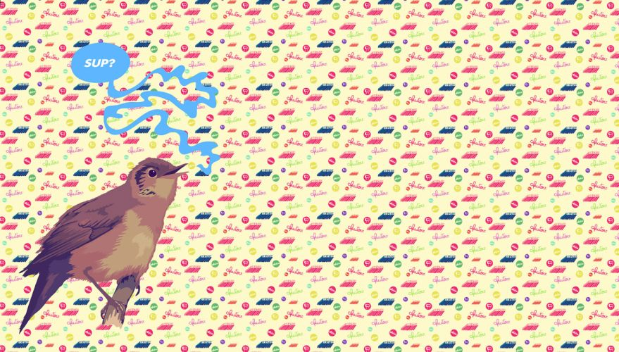 birds humor hello text wallpaper