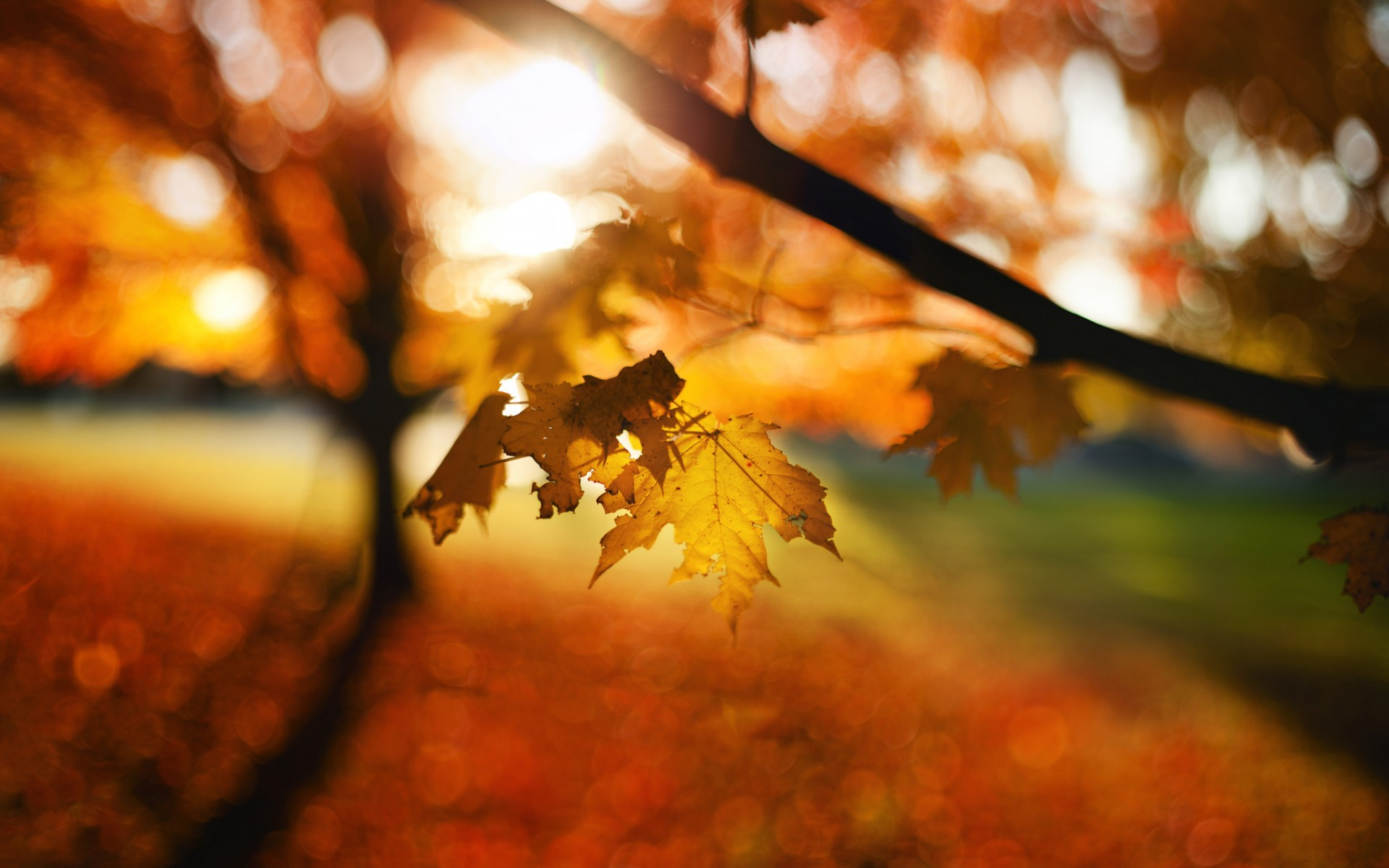 Fall Leaves Photography Wallpaper Leaves autumn bokeh tr...