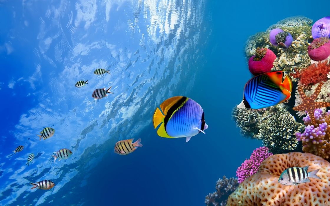 underwater coral fish sea ocean wallpaper