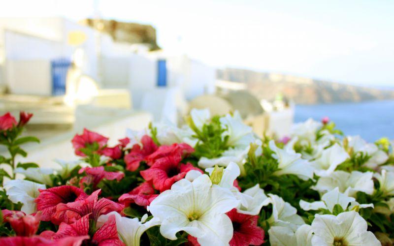 greece sun sea summer flowers macro buildings wallpaper