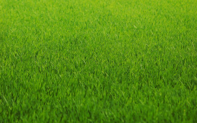 macro grass abstract green pattern texture wallpaper