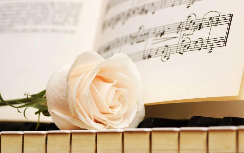notes keys rose white piano flowers wallpaper