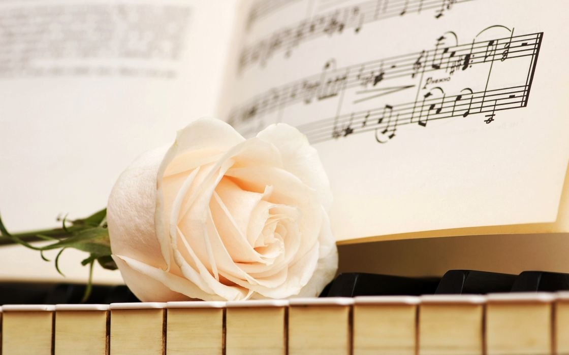 Notes Keys Rose White Piano Flowers Wallpaper