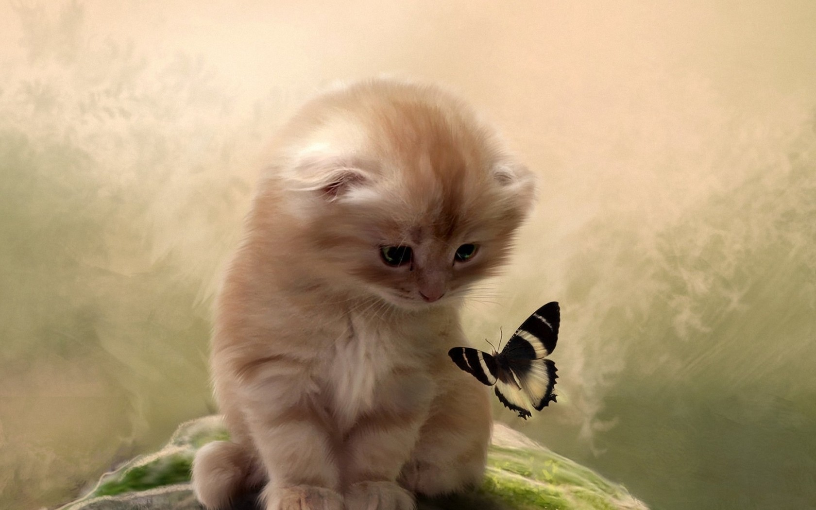 butterfly kitten cat wallpaper 1680x1050 48565