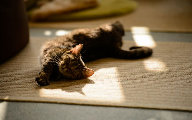 Cat Stretch Rest wallpaper