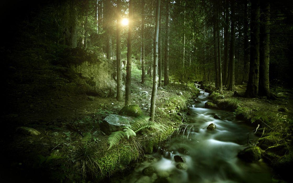 Forest Trees Sunlight Stream trees rivers wallpaper