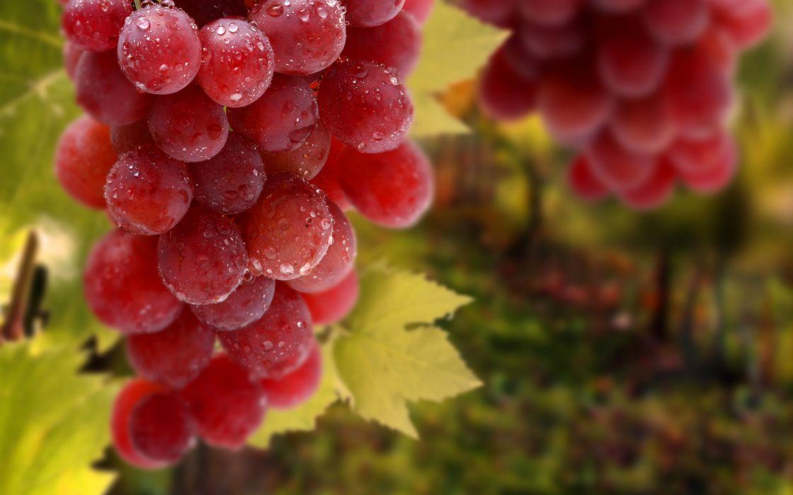 grapes leaves bunch drops fruit vineyard wallpaper