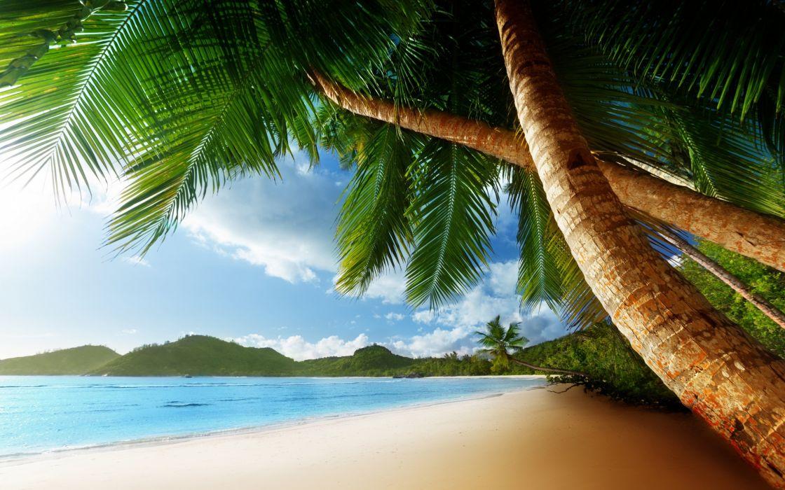 Tropical Palm Trees Beach Ocean Wallpaper