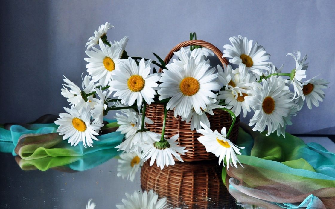 daisies flowers flower bouquet beautiful field basket still life bouquet wallpaper