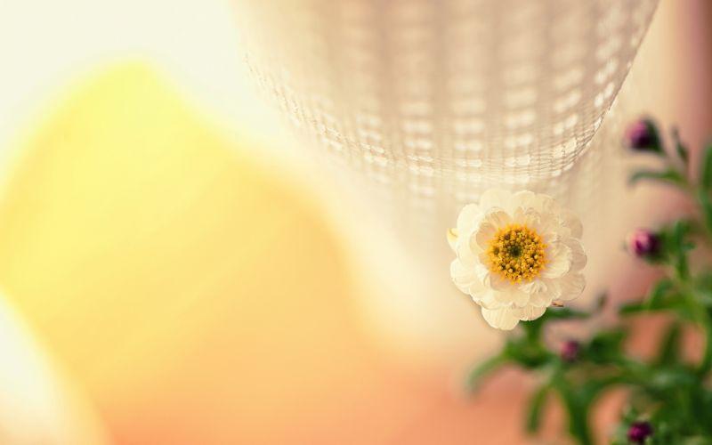 Flower Macro b wallpaper
