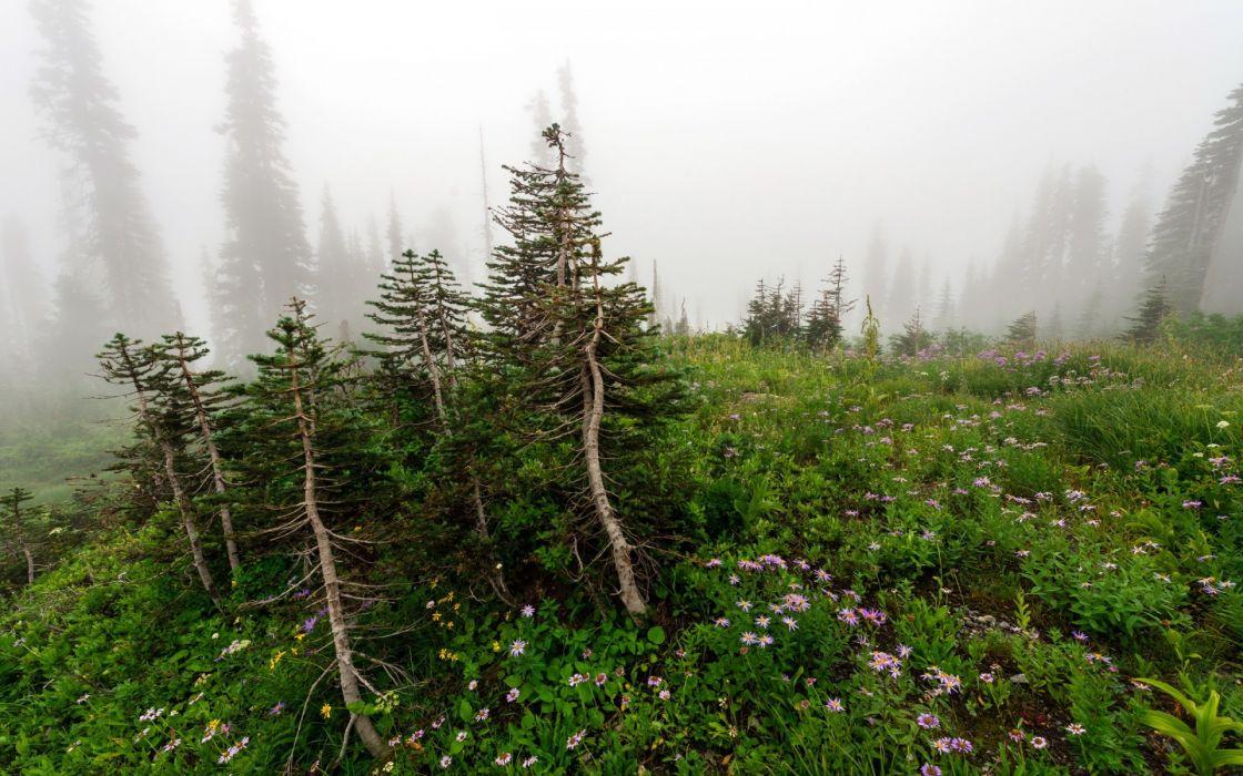 flowers  trees  mist  nature mountains fog wallpaper