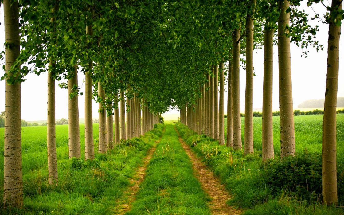 roads trail landscapes trees leaves wallpaper