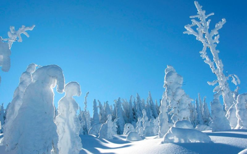 snow winter trees sky wallpaper