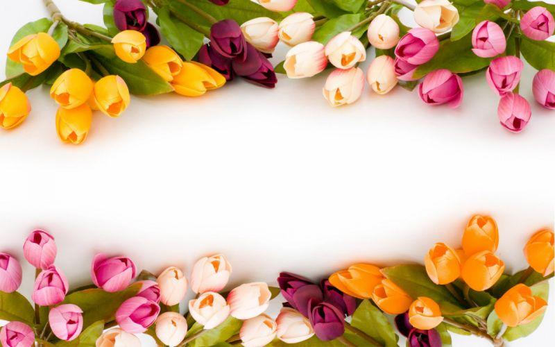 tulips_ flowers flower_ nature spring wallpaper