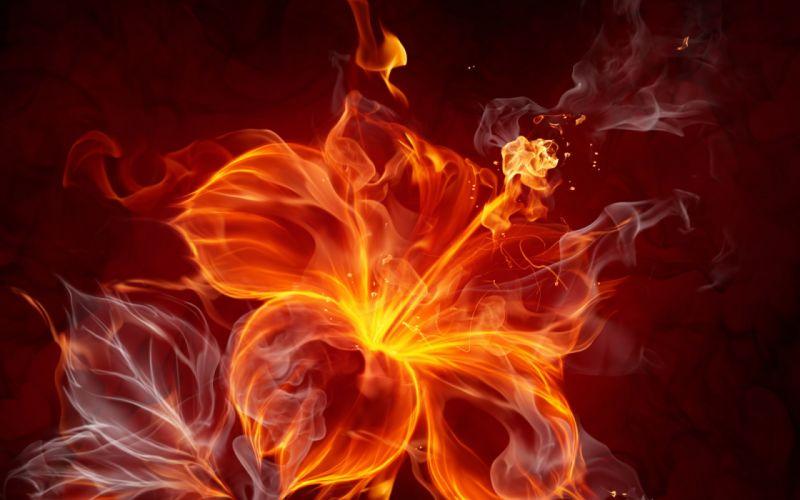 fire flower abstract wallpaper