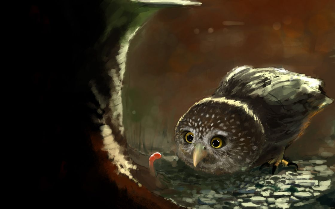 art owl worm worm food bird tree stump wood wallpaper
