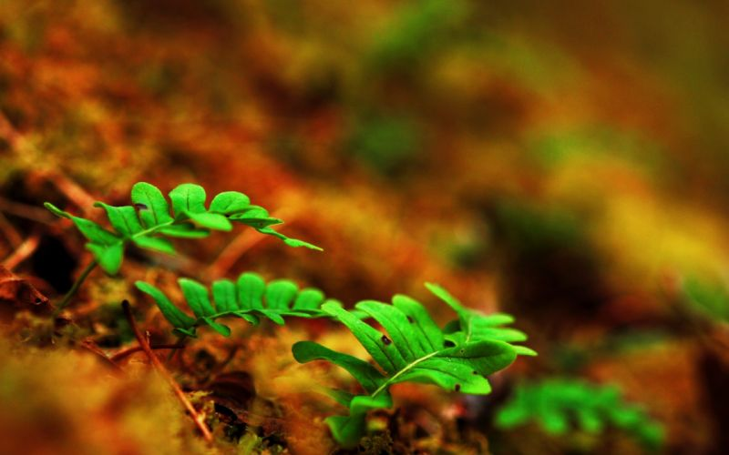 leaves stems fern macro sprouts ground wallpaper