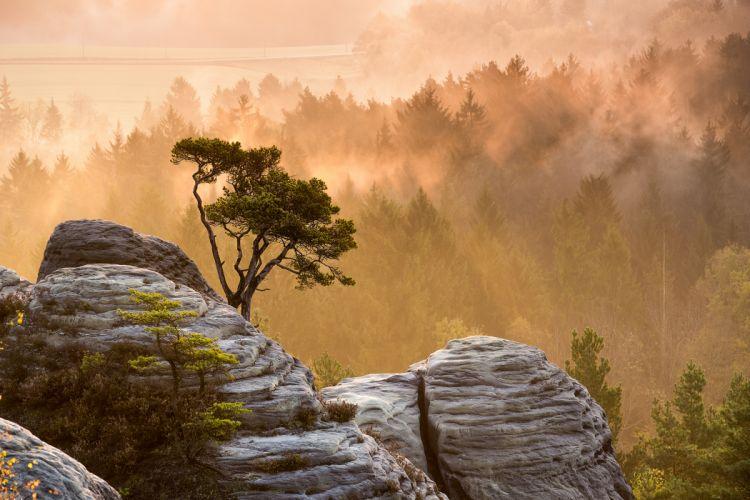 nature night fog light wood rocks stones wood wallpaper