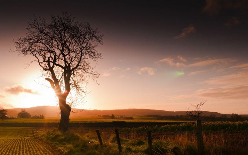 sunset field tree fence landscape wallpaper