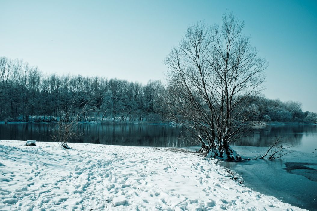 trees  winter  lake  snow wallpaper