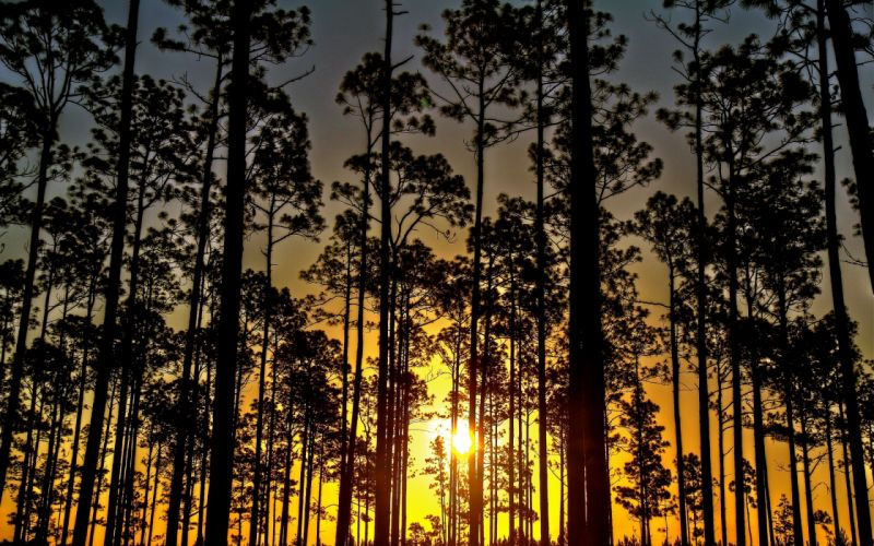 sunset forest trees nature hdr wallpaper