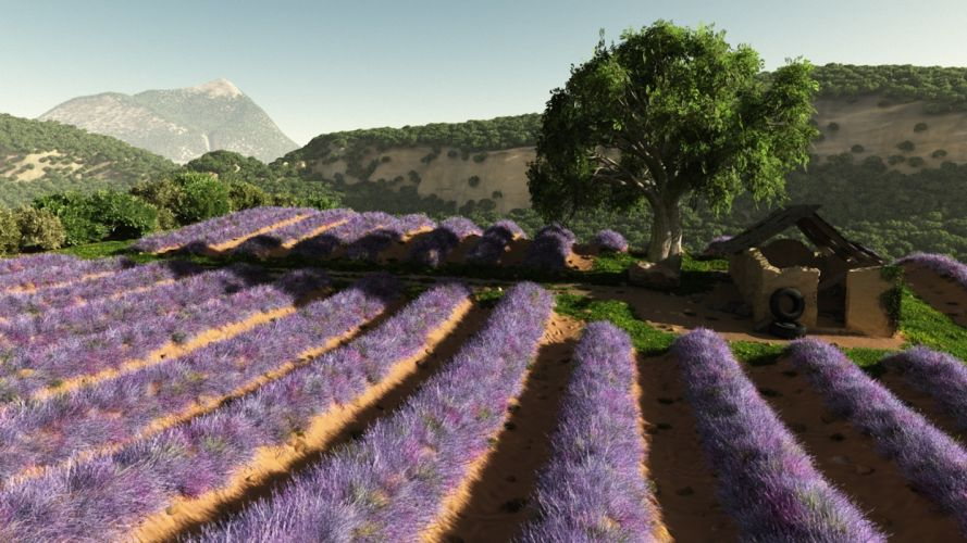 art field flowers lavender lilac buildings trees hills rows mountains wallpaper